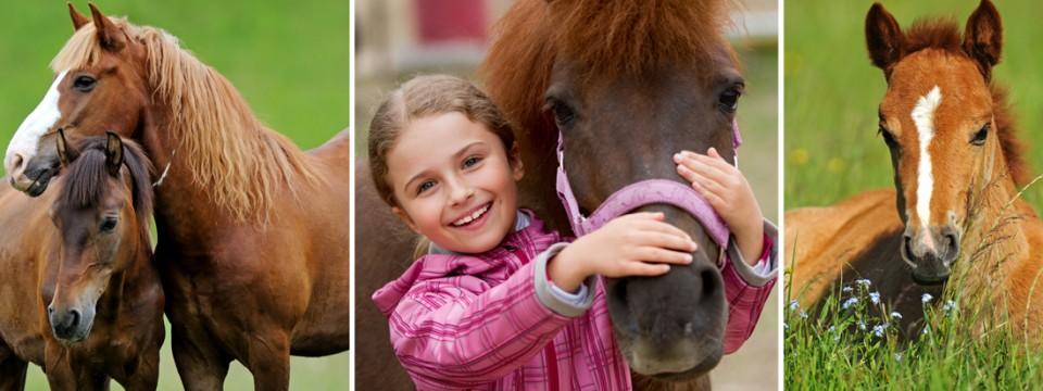 Celovita veterinarska oskrba konj