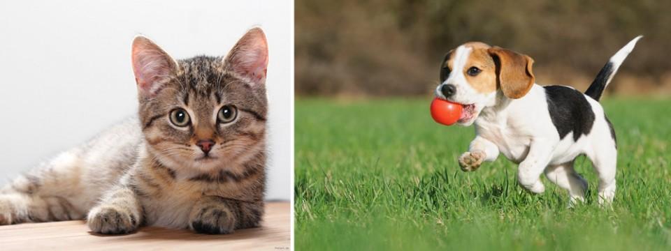 Hrana za pse in mačke