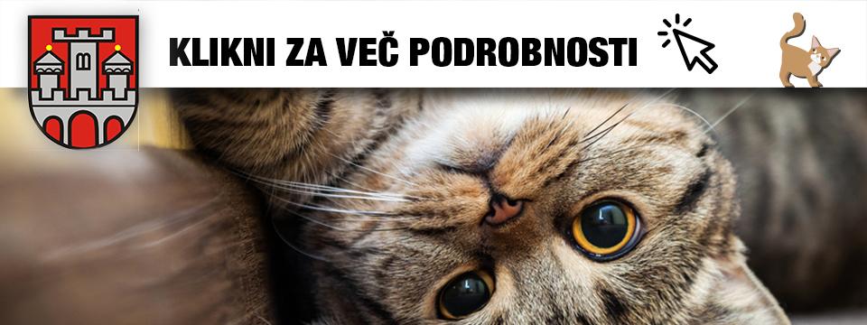 Sofinanciranje sterilizacij mačk